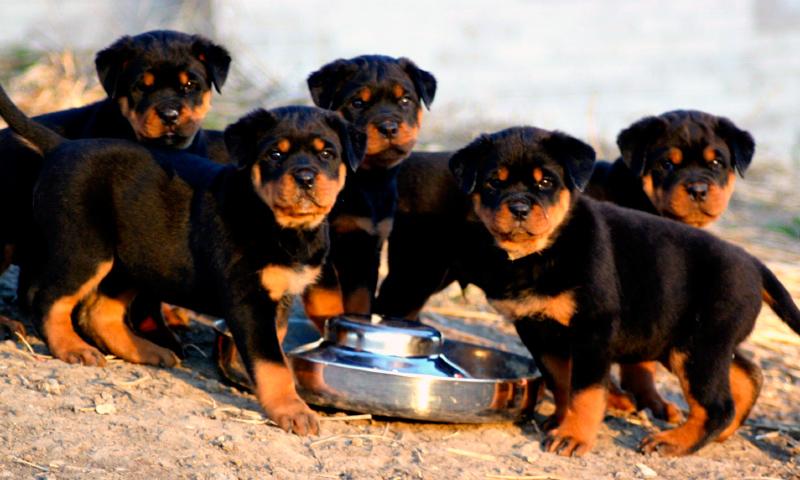 breeders or breeding establishments